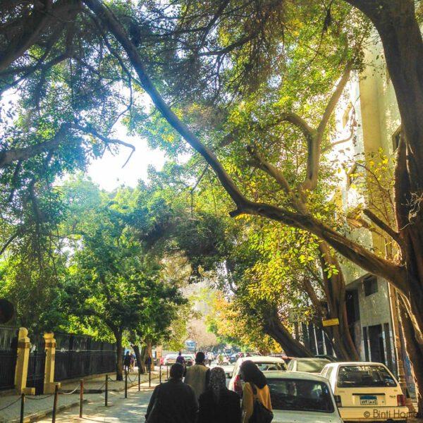 Zamalek Cairo ©BintiHome