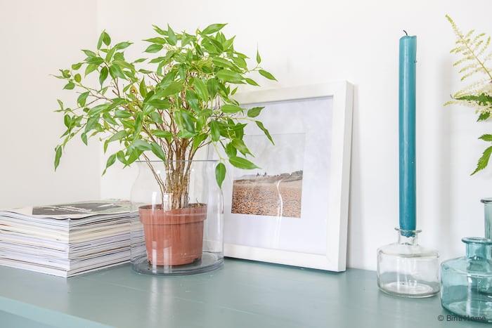 Hema Binti Home Blog plant in een vaas stylingtip ©BintiHome