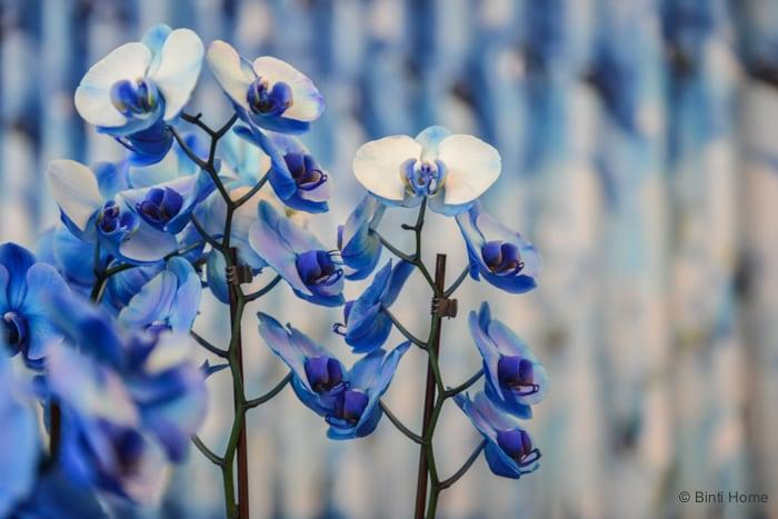 Orchids by Urike Jurklies en Willemijn de Wit  DutchDesignWeek2015 ©BintiHome
