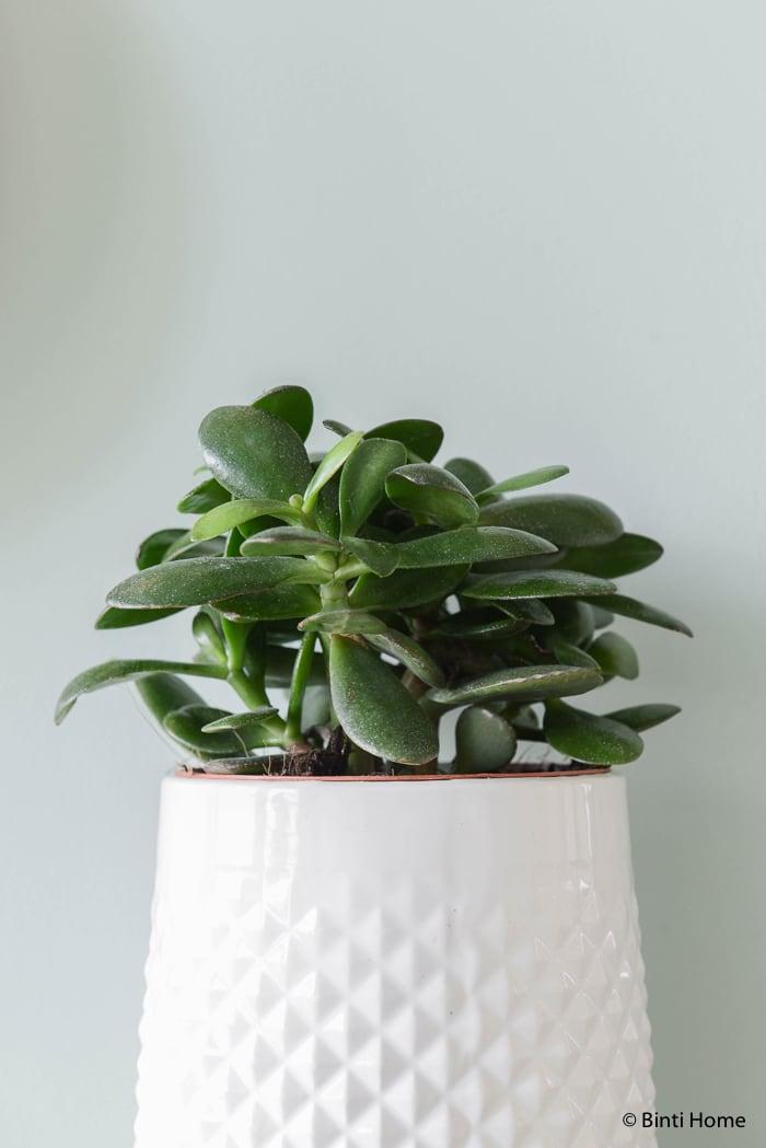 groen Hal styling wooninspiratie mintgroen en aubergine voor Hema Blog ©BintiHome-4
