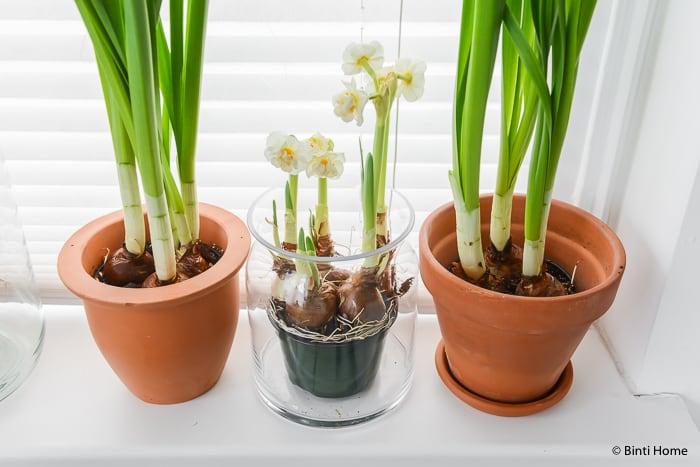Narcissen mooi wat bloemen doen interieurstyling ©BintiHome-13