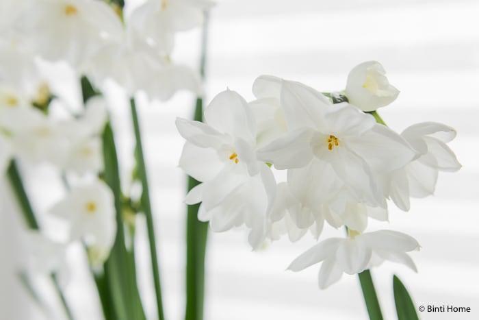 Narcissen mooi wat bloemen doen interieurstyling ©BintiHome-14