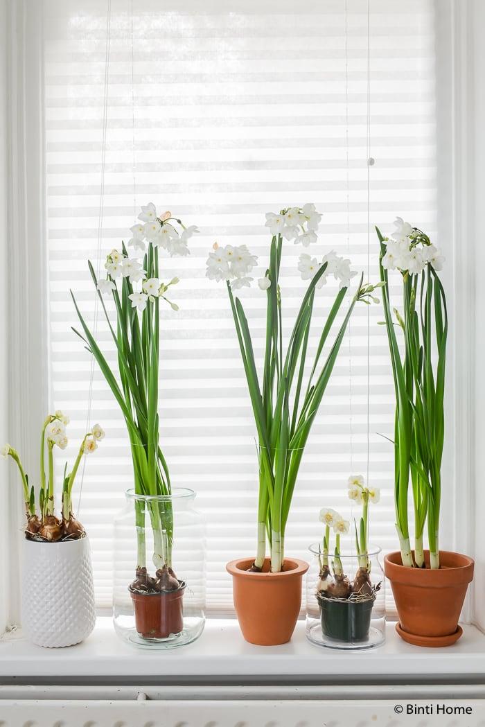 Narcissen mooi wat bloemen doen interieurstyling ©BintiHome-2