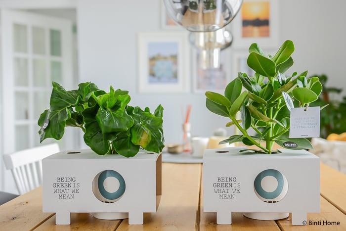 Ogreen planten Binti Home styling ©BintiHome-3