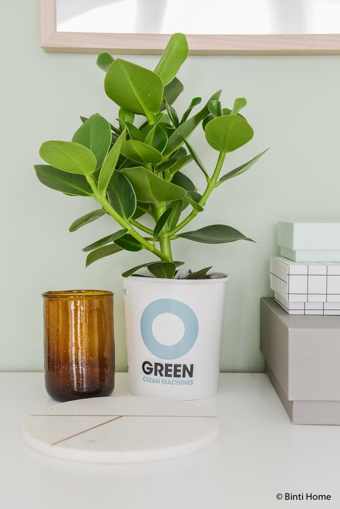 Ogreen planten Binti Home styling ©BintiHome-6