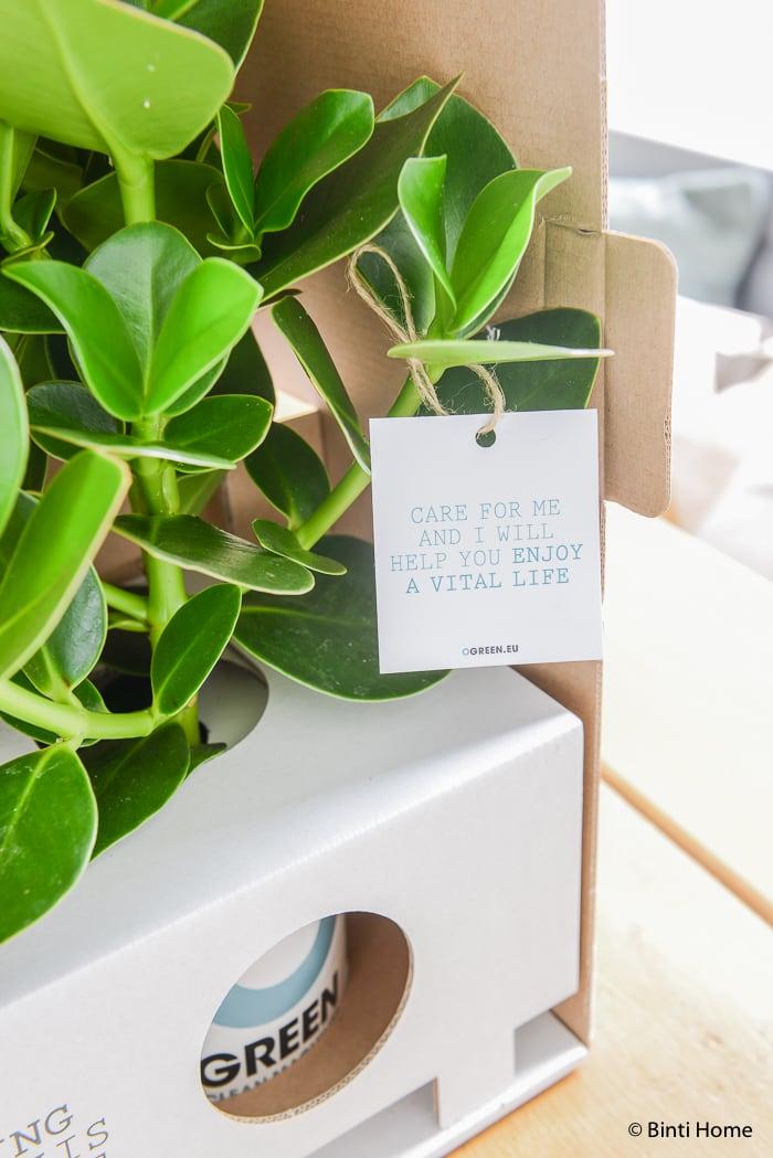 Ogreen planten Binti Home styling ©BintiHome
