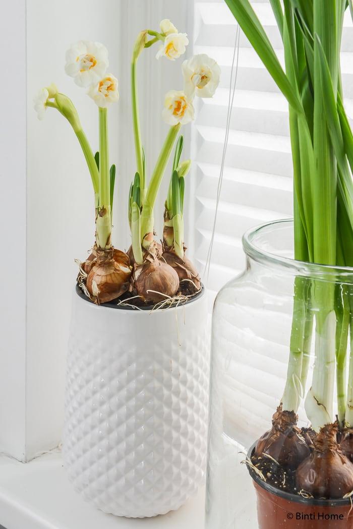 Narcissen mooi wat bloemen doen interieurstyling ©BintiHome