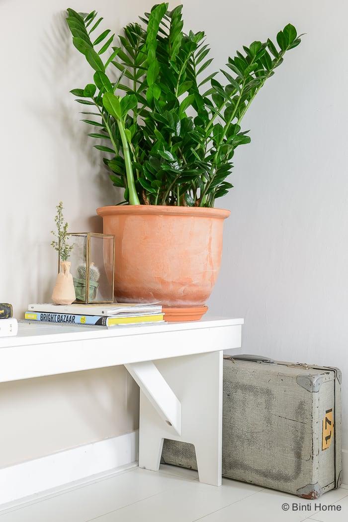 Mooi Wat Planten Doen Zamioculcas plant van de maand ©BintiHome-9