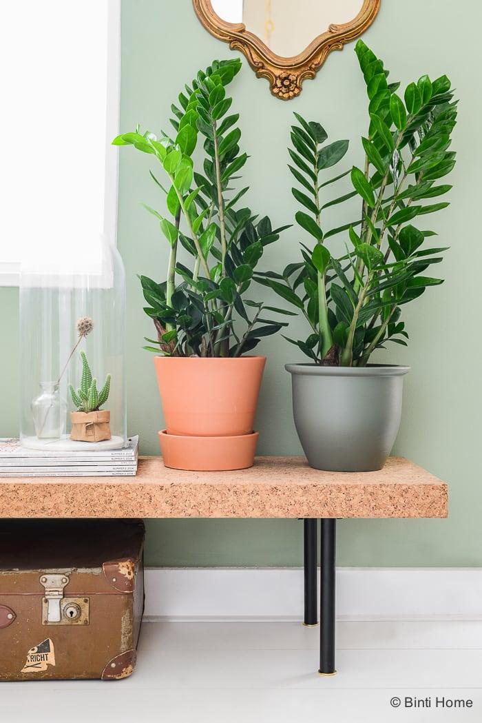 Mooi Wat Planten Doen Zamioculcas plant van de maand ©BintiHome Blog