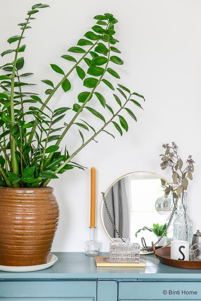 Mooi Wat Planten Doen Zamioculcas plant van de maand ©BintiHome