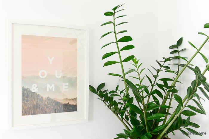 MooiWatPlantenDoen Zamioculcas plant van de maand ©BintiHome-2