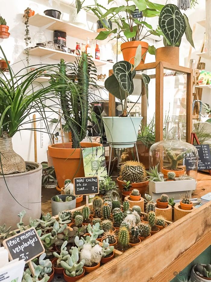Cactus verzameling Bijzondere planten shoppen bij Wildernis Amsterdam ©BintiHome