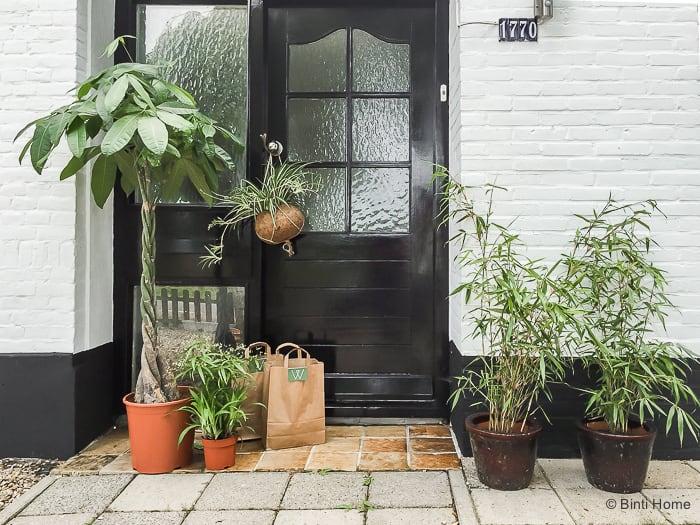 Bijzondere planten shoppen bij Wildernis Amsterdam thuis ©BintiHome