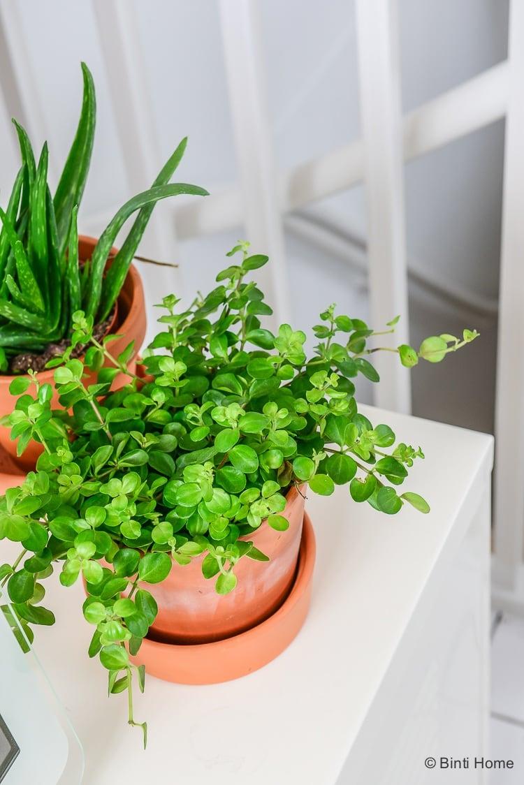 planten in de slaapkamer Jaren 30 woning Haarlem interieurontwerp ©BintiHome