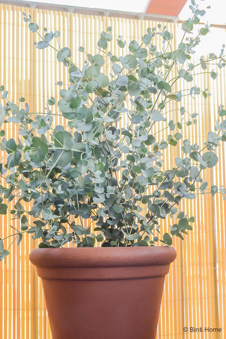 Balkon inspiratie klein balkon inrichten met veel planten Lavendel Mooiwatplantendoen ©BintiHome