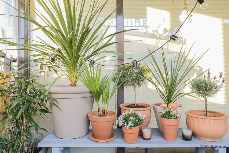 Balkon inspiratie klein balkon inrichten met veel planten Mooiwatplantendoen ©BintiHome