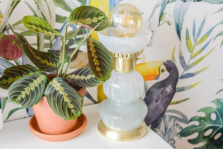 Planten in huis Green Lifestyle Store ©BintiHome