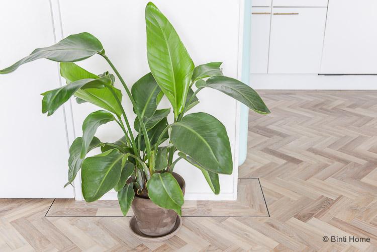 Planten in huis Paradijsvogelplant Strelitzia Nicolai Green Lifestyle Store ©BintiHome