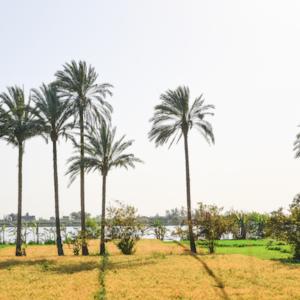 Egyptische palmbomen Binti Home