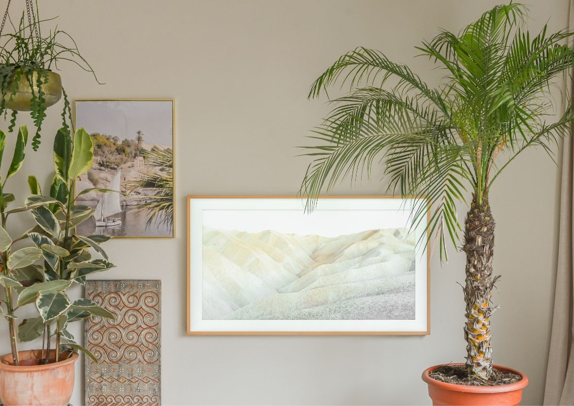 De mooiste Palmboom als kamerplant in de woonkamer