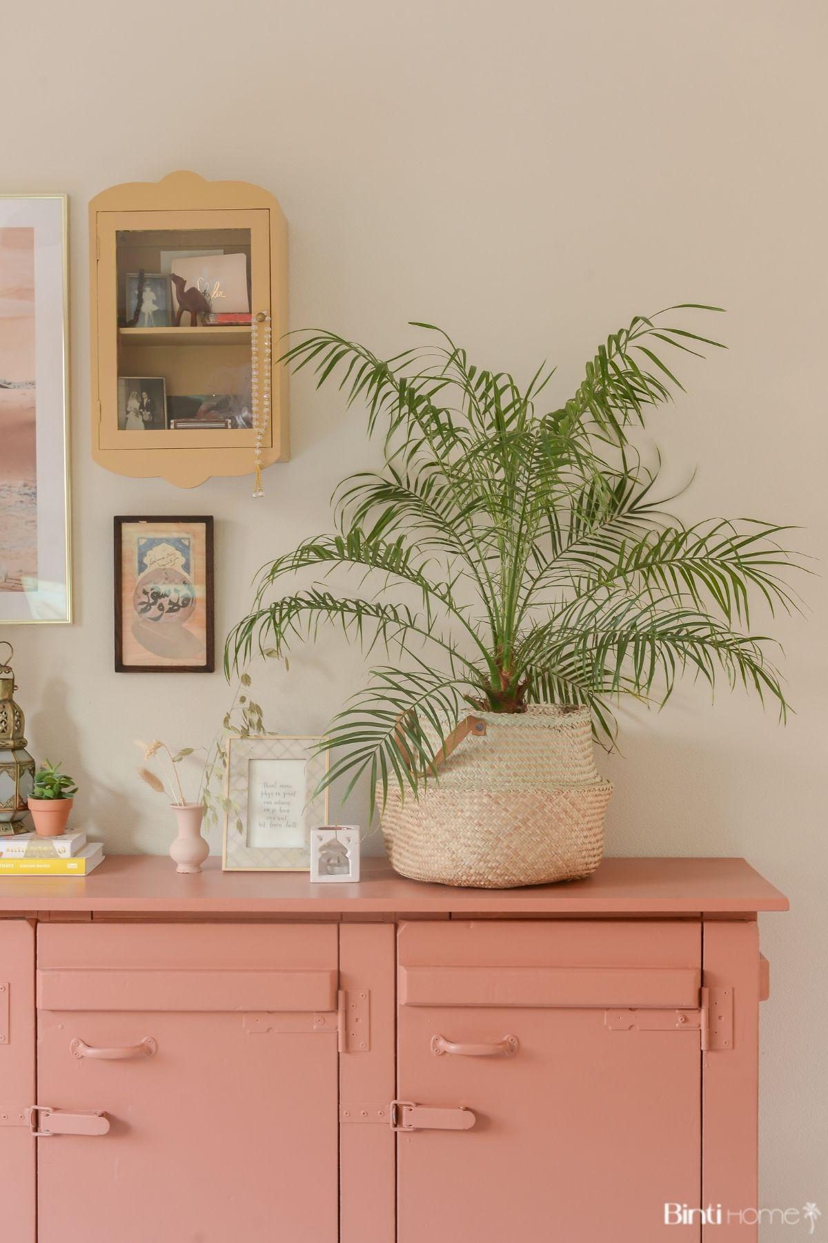 Phoenix Roeblelini palmboom in huis